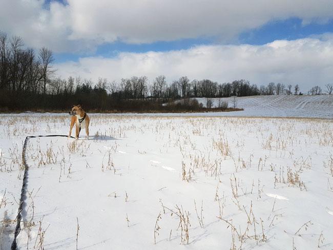 Dog in a snowy field