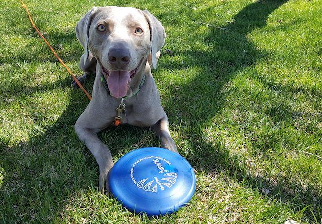 Hyperflite discs for dogs