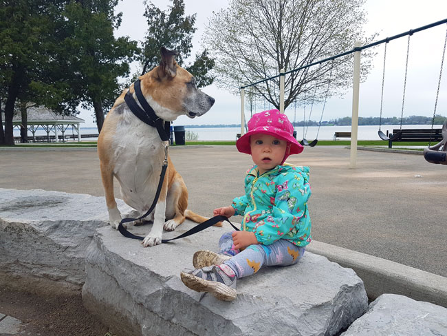 Adopting a dog when you have kids