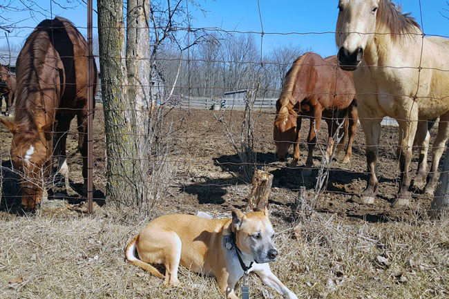 What are the best farm dogs?