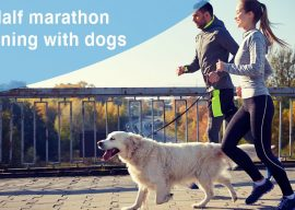 Is it OK to Run a Half Marathon with Your Dog?