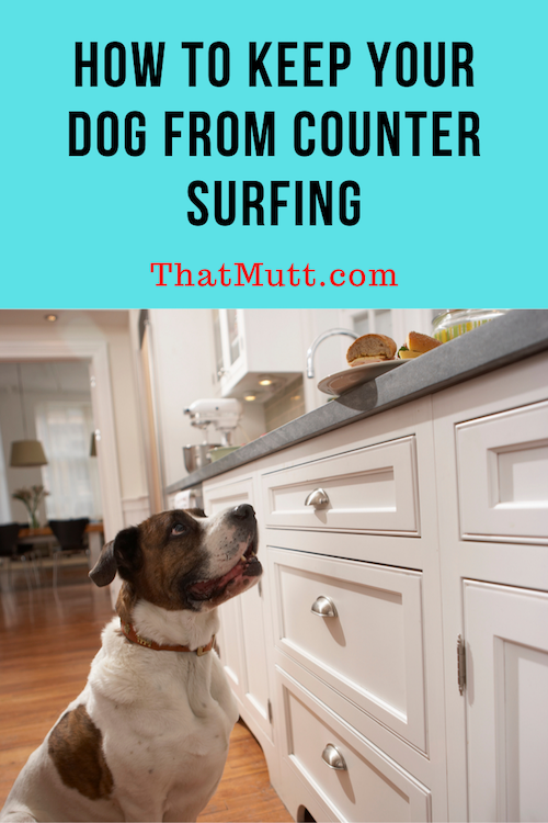 How to stop a dog from counter surfing
