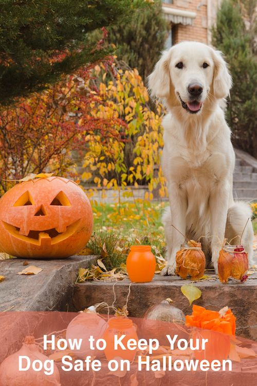 How to keep your dog safe on halloween