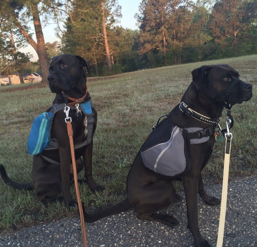 Buzz and Missy wearing their dog backpacks