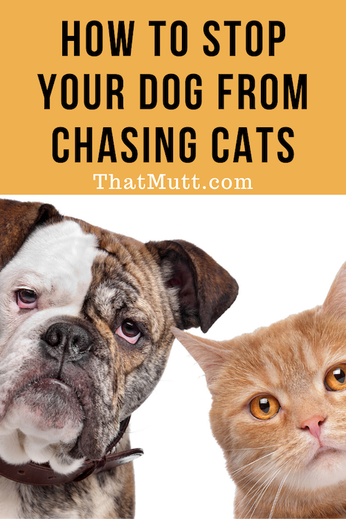 How to stop your dog from chasing cats