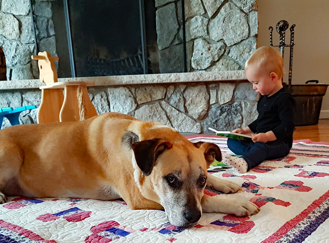 What I will do differently with our next dog