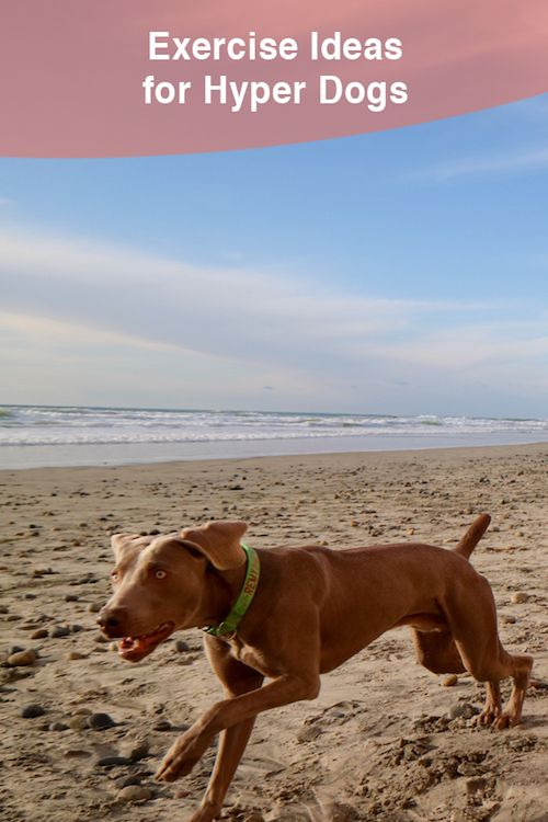 Dog Exercise Ideas For Hyper Dogs How To Finally Tire Out Your Dog,What A Beautiful Name Guitar Chords G