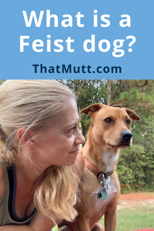 What is a feist dog