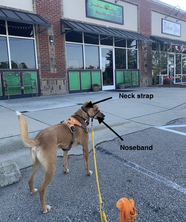 Why I Use A Head Collar For Dogs