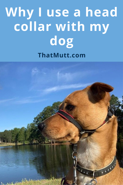 head collars for dogs