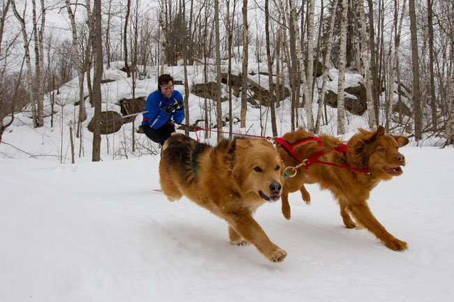 Skijoring with two dogs