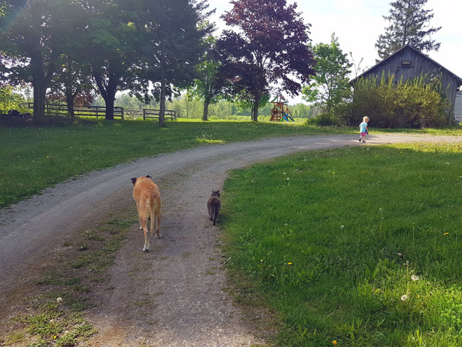 Dog and cat walking along a driveway