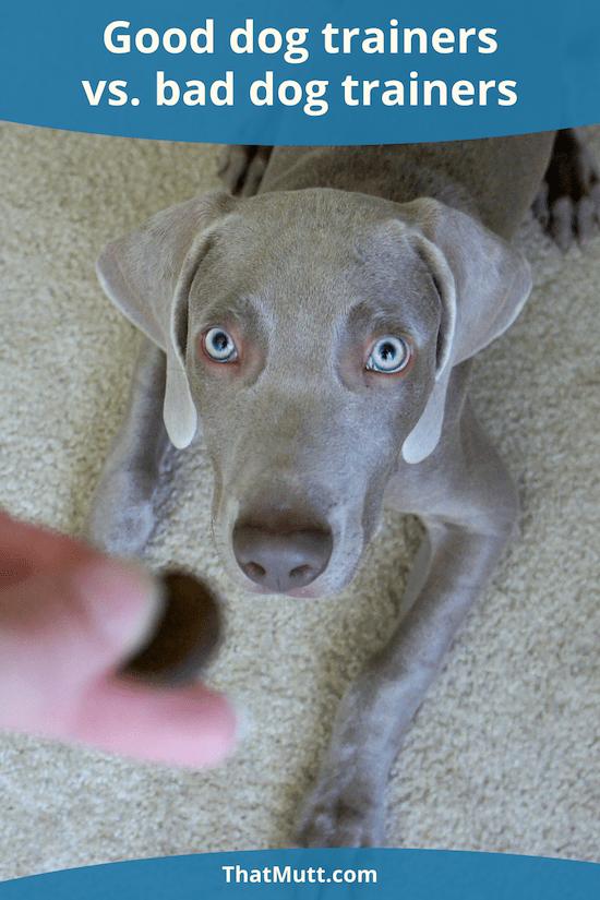 Good dog trainers vs. bad dog trainers
