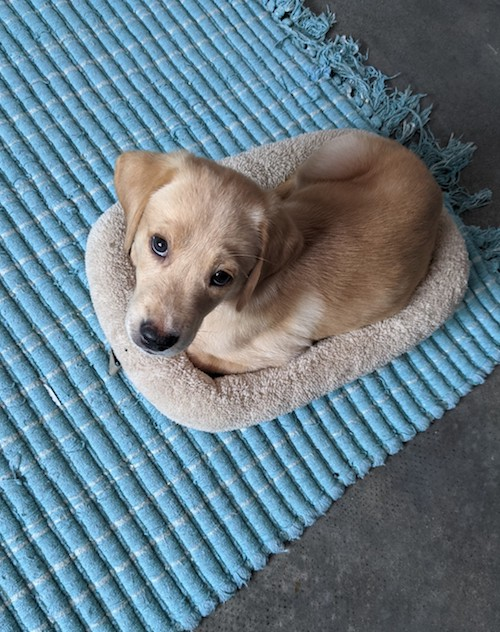 Your puppy's first night home